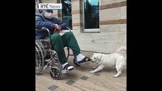 Loyal dog waits six days outsi…