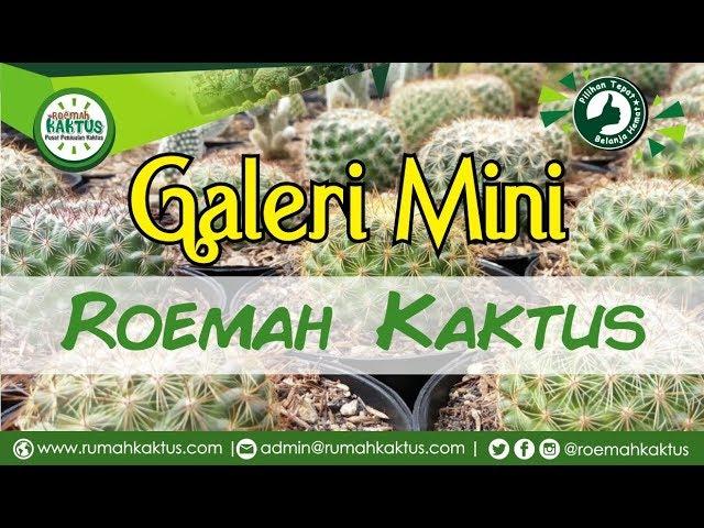 Galeri Mini Roemah Kaktus