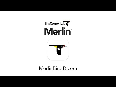Merlin Bird ID--Free App From The Cornell Lab