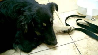 1. Молодая собака со стоянки (в вет. клинике на стерилизации)