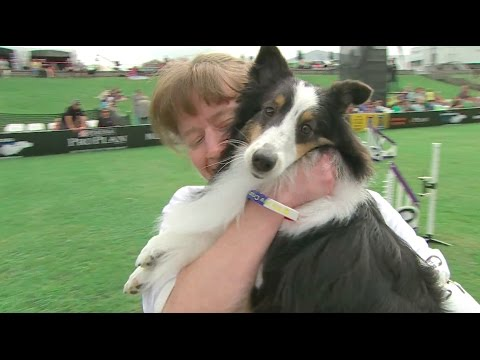Full Small Dog Agility - 2016 Purina® Pro Plan® Incredible Dog Challenge® National Finals