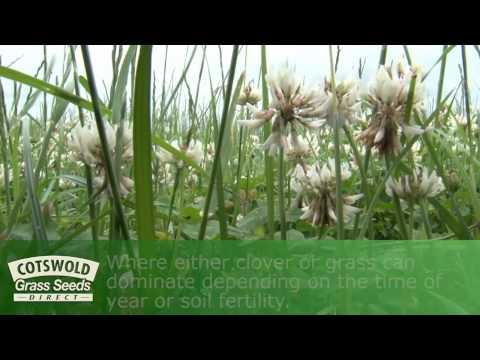 Herbal Leys - Cotswold Seeds