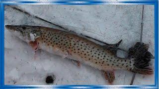Зимняя рыбалка на хапуги хлопок лов карася и щуки зимой