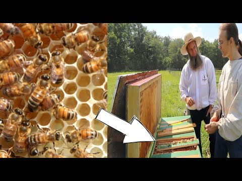 OPENED Up A HORIZONTAL BEE HIVE And Found This!