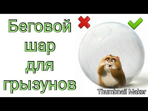 Беговой шар для грызунов || Как приучить грызуна к беговому шару || + и -