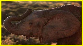 物競天擇,求生存,非洲大象正在改變基因,不再長象牙 thumbnail
