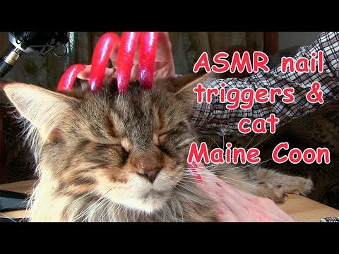 ASMR TRIGGER NAILS SOUND TAPPING & SCRATCHING FUNNY CAT