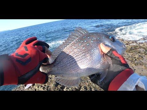 4k Jervis Bay Rock Fishing E4(저비스 베이 갯바위 낚시) Snapper FISHING