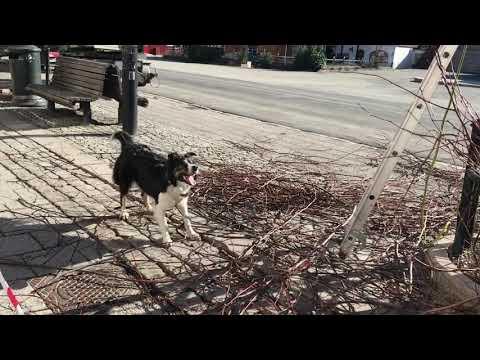 Hunden Luna fanger kvister
