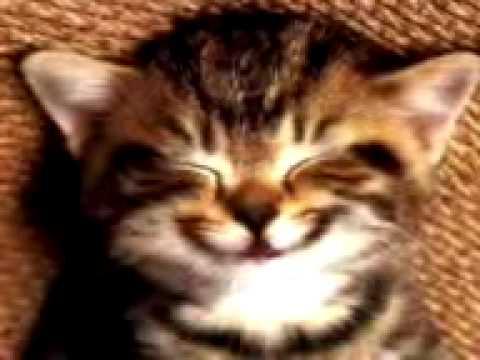 Susse Katze Singt Geburtstags Lied Youtube