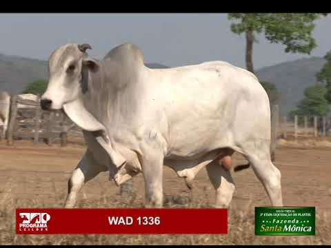 LOTE 24 - WAD 1336