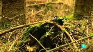 Grandes Documentales-El reino de los bosques,
