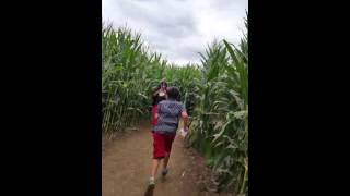 Running In The Corn Maze