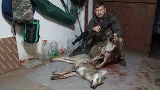 Ночная охота на волков с тепловизором