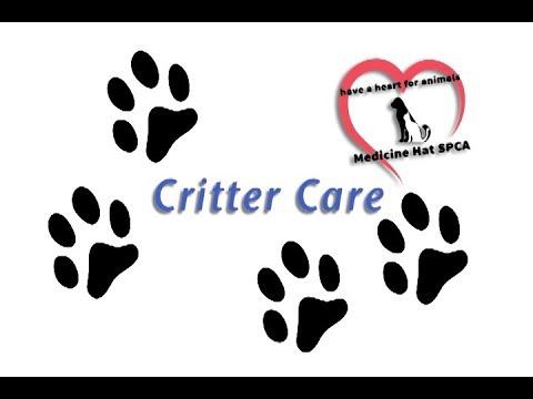 Medicine Hat SPCA's Critter Care - Puppies Part 1
