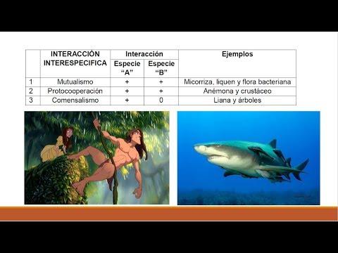 ecología ( mutualismo, parasitismo, comensalismo, etc ...
