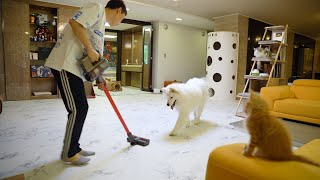 Dogs and Cats seeing a Cordless Vacuum for the First Time