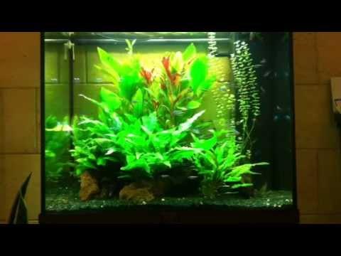 Acquario 120 litri con neon e ramirezi aquaproject andria for Acquario 120 litri