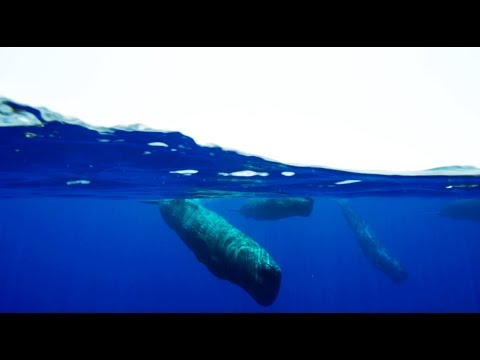 Amazing Sperm Whale Cam | Blue Planet II Behind The Scenes
