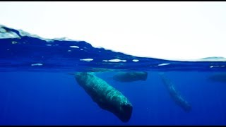 Amazing Sperm Whale Cam - Blue Planet II Behind The Scenes