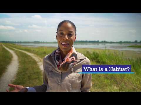 Coastal Wetlands | Great Lakes Now Virtual Field Trip