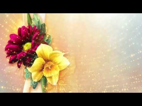 Best Golden Flowers Background | Download Free Video Background | DMX HD BG 319