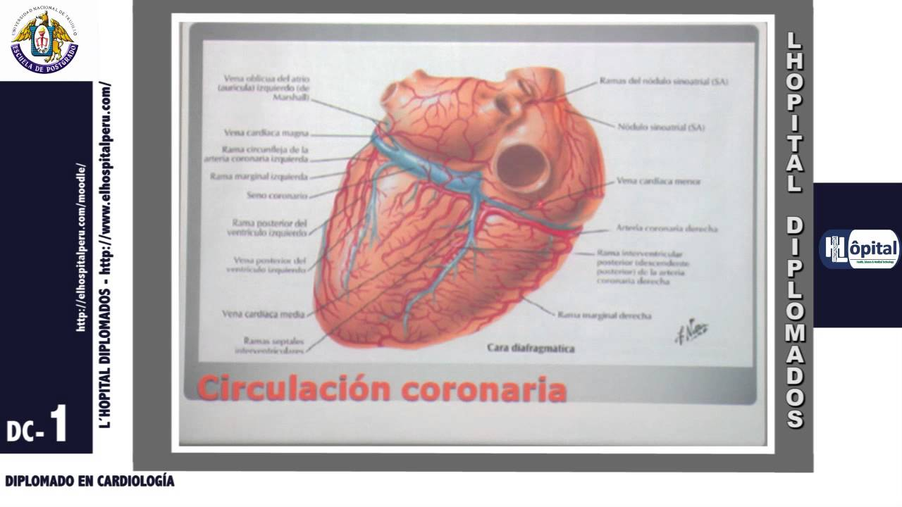 CARDIOLOGÍA 1.4: Anatomía y Fisiología Cardiaca Dr. Carlos Arriaga ...