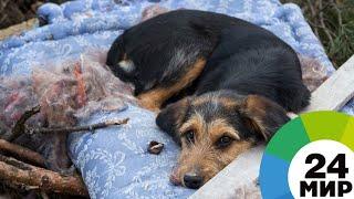 Право на жизнь: волонтеры из Бишкека спасают брошенных собак - МИР 24