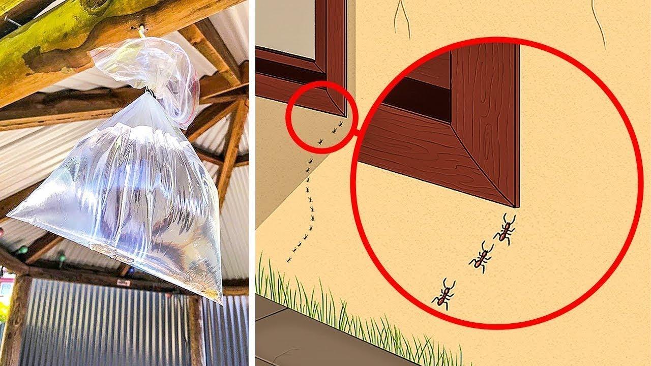 Karıncaları öldürmeden nasıl uzaklaştırılır