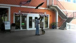 German Shepherd Puppy Training-socializing Your Puppy