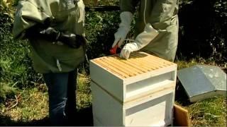 Beekeeping for Beginners DVD Extract