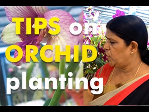 How to do Orchid planting