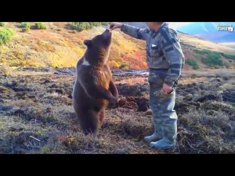 Russians Feeding Bears. Bears In The Streets Of Russia And Inside Of Houses