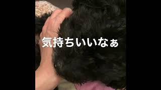 ダイスケ - 愛しのリリィ