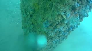 5 м под водой. Сбор мидий. Чёрное море. Underwater. Black Sea Crimea.