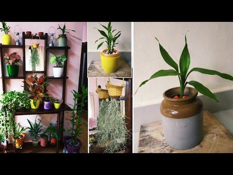 My Indoor plants | indoor gardening tips | self watering pots | malayalam