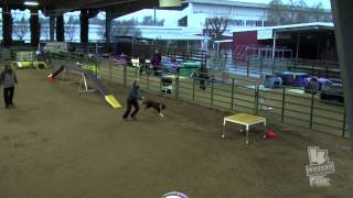 Kyper Sat Novice Standard Staffordshire Bull Terrier Club Of America Akc Dec 2012