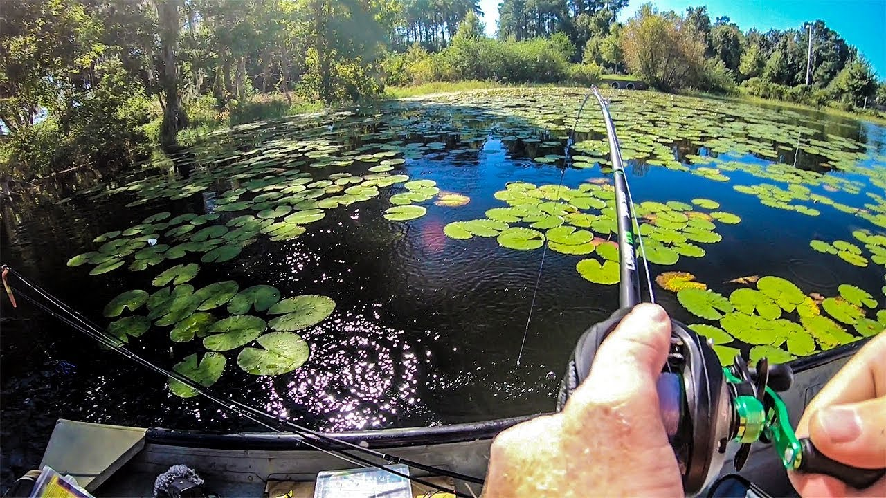 Download Fishing for Bass In Lilly Pad Pockets!!