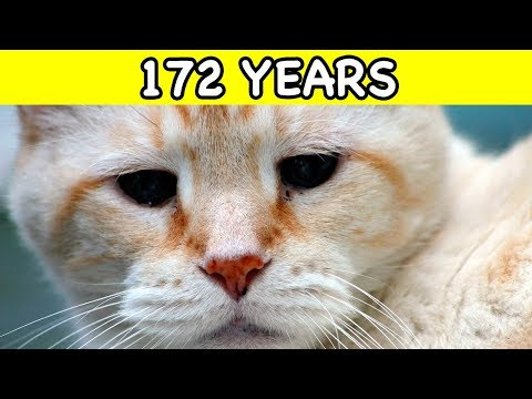 THE OLDEST CATS In The World