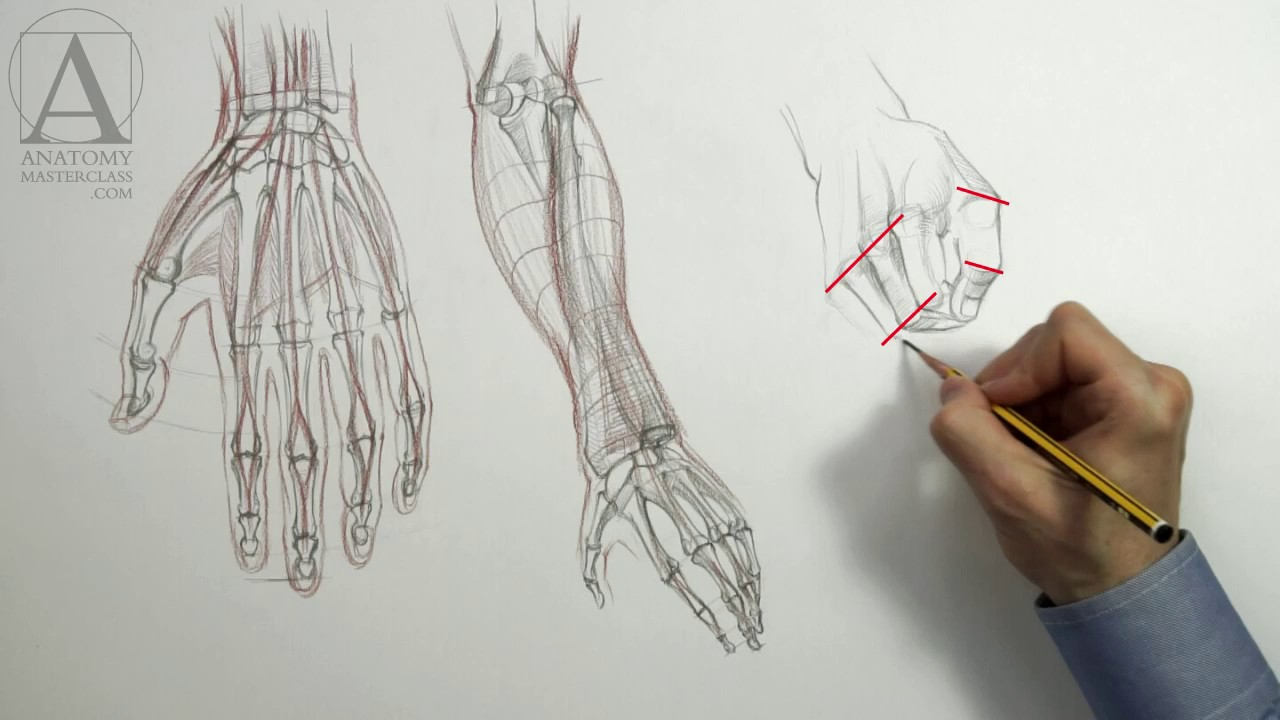 Drawing Hands - Anatomy Master Class for figurative artists - YouTube