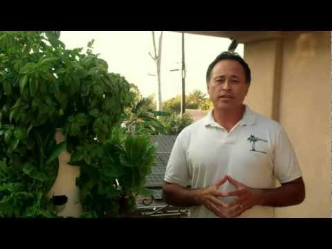 Aeroponics Organic Gardening in Los Angeles