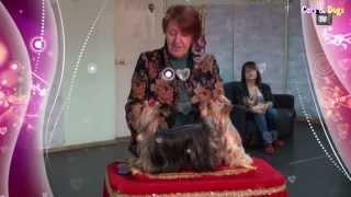 Cats&DogsTV - УДИВИТЕЛЬНЫЙ МИР СОБАК - СОБАКИ ПОРОДЫ ЙОРКШИРСКИЙ ТЕРЬЕР / YORKSHIRE TERRIER(Телеканал Cats&DogsTV и компания КлинВет представляют УДИВИТЕЛЬНЫЙ МИР СОБАК - СОБАКИ ПОРОДЫ ЙОРКШИРСКИЙ ТЕРЬЕР..., 2014-02-06T18:00:46.000Z)