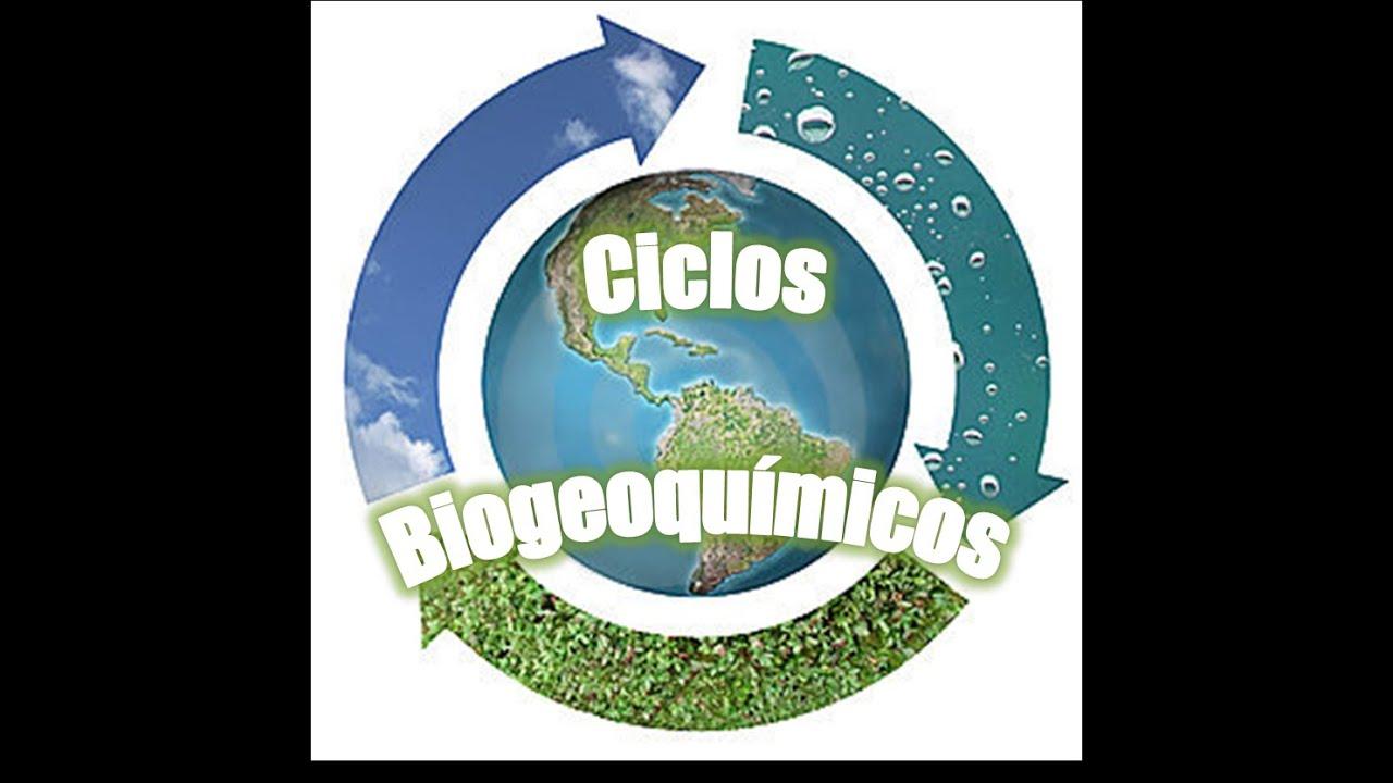 Resultado de imagem para ciclos biogeoquimicos