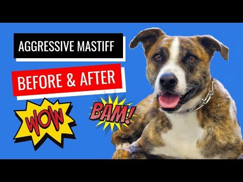 Dog Training In Westchester NY | The Art Of K9 Dog Training