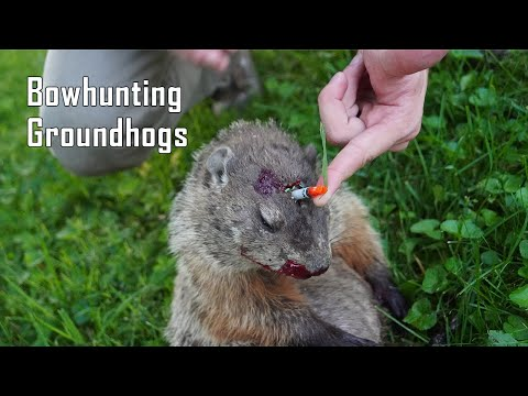 BOWHUNTING Groundhogs | Right Between the Eyes! | 2020