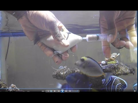 How To Care For A Fish With Swim Bladder Issues