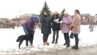 В г.Орехово-Зуево травят собак
