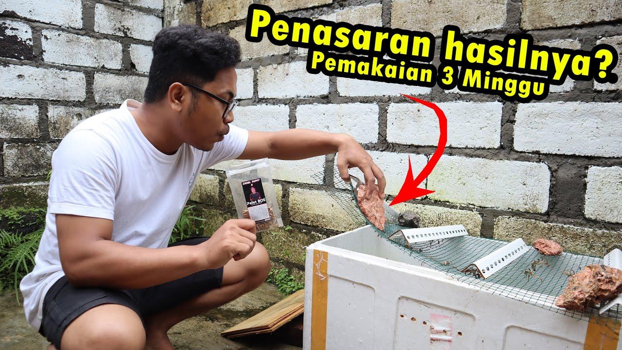 Hasil Pelet Bunga 3 Minggu Dan Unboxing Channa Baru Datang...