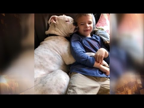 6-Year-Old Nonverbal Boy And Deaf Boxer Dog Are The Best Of Friends