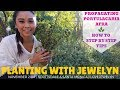 Planting with Jewelyn: Propagating My Big Portulacaria Afra | November 2018 | ILOVEJEWELYN